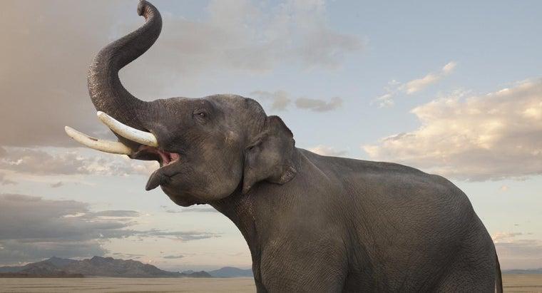 elephants-show-emotion