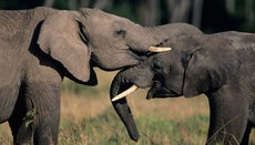 What Do Elephants Symbolize?
