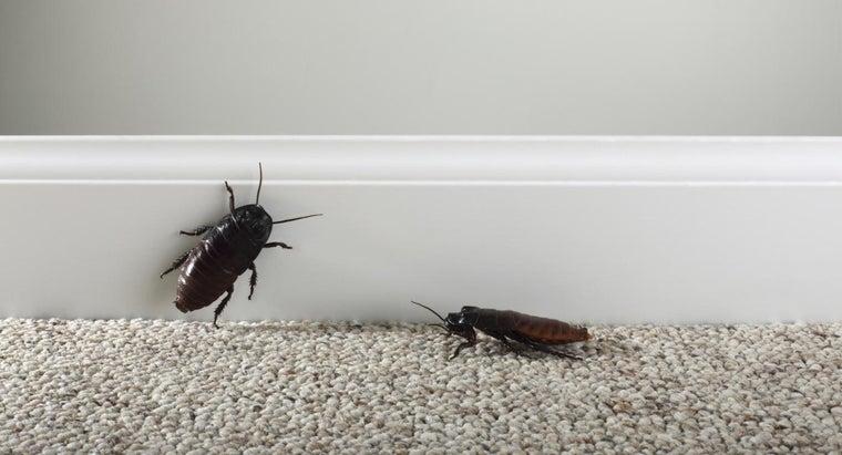 eliminate-roaches