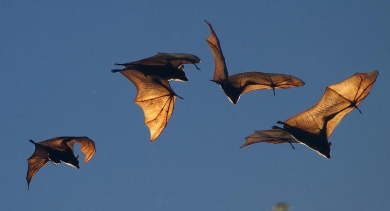 enemies-bats