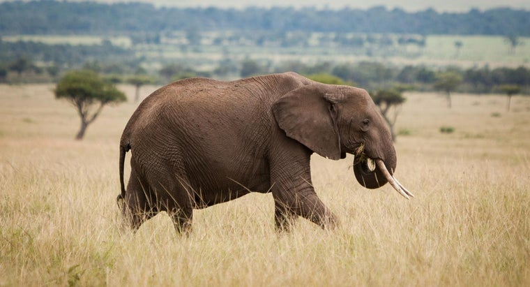 enemy-african-elephant