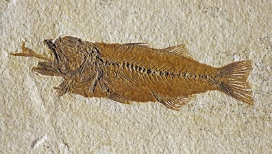What Was the Eocene Epoch?