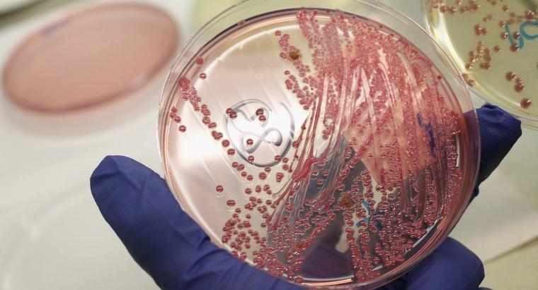 eubacteria-obtain-energy