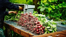 What Is the Exact Definition of Organic Food?