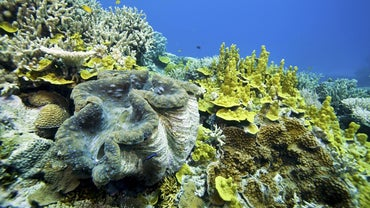 What Is an Example of Mutualism in the Ocean?