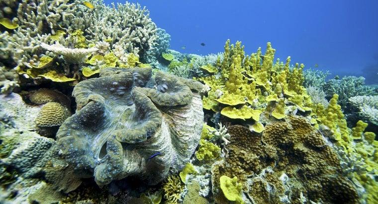 example-mutualism-ocean