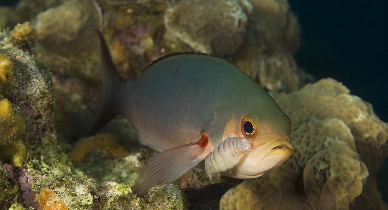 Parasitism >> What Is An Example Of Parasitism In Coral Reefs Reference Com