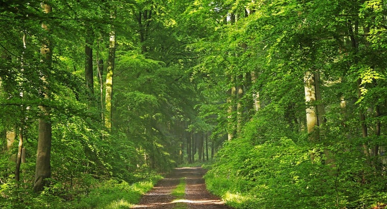 example-parasitism-deciduous-forest