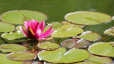 What Are Some Examples of Aquatic Plants?