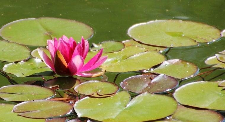 examples-aquatic-plants