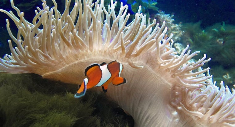 examples-commensalism-ocean
