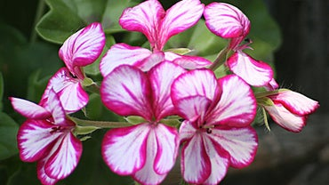What Are Examples of Ornamental Plants?