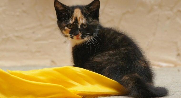 examples-unique-female-kitten-names