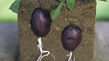 What Factors Affect Soil Fertility?
