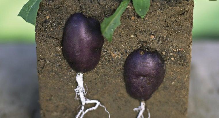 factors-affect-soil-fertility