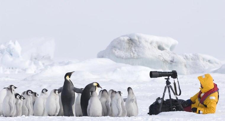 famous-wildlife-photographers