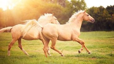 How Far Can a Horse Run?
