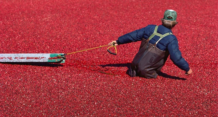 farmers-harvest-cranberries