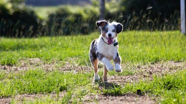 How Fast Can a Dog Run?
