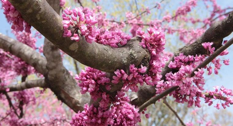 fast-dogwood-tree-grow