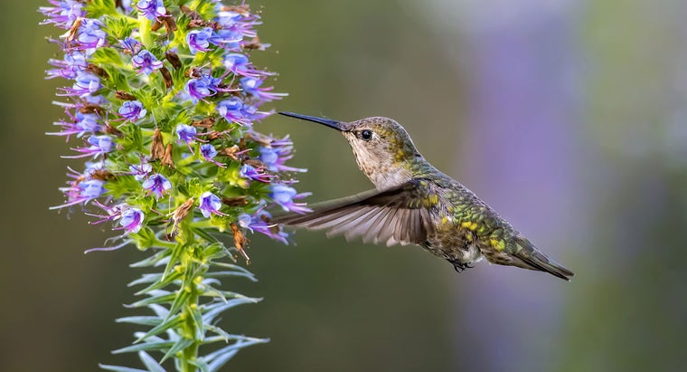 fast-hummingbirds-fly