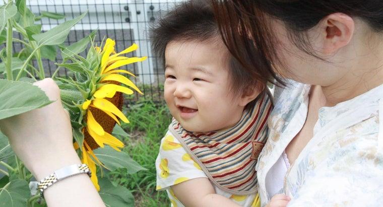 fast-sunflower-seeds-grow