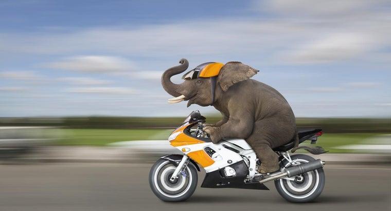 fastest-animal-world
