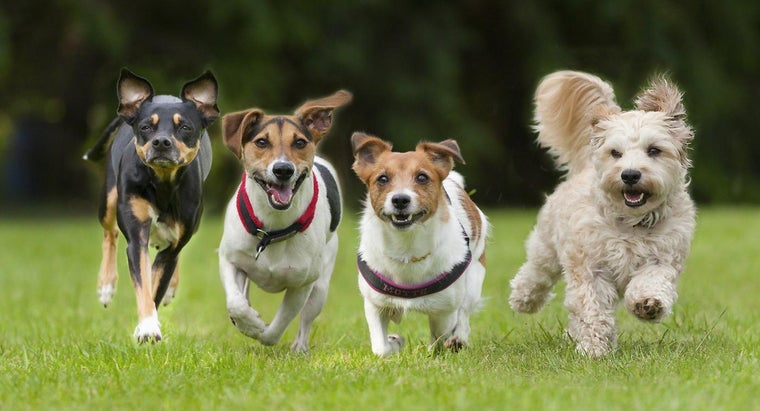 fastest-dog-world
