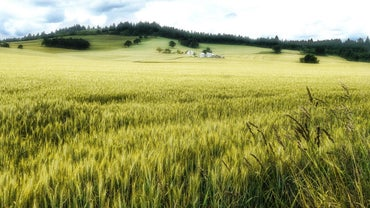 What Is the Fastest Growing Grass Seed?