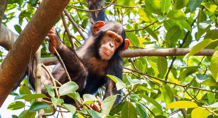 female-monkey-called