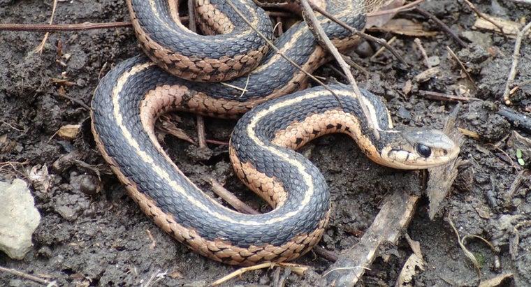 female-snake-called