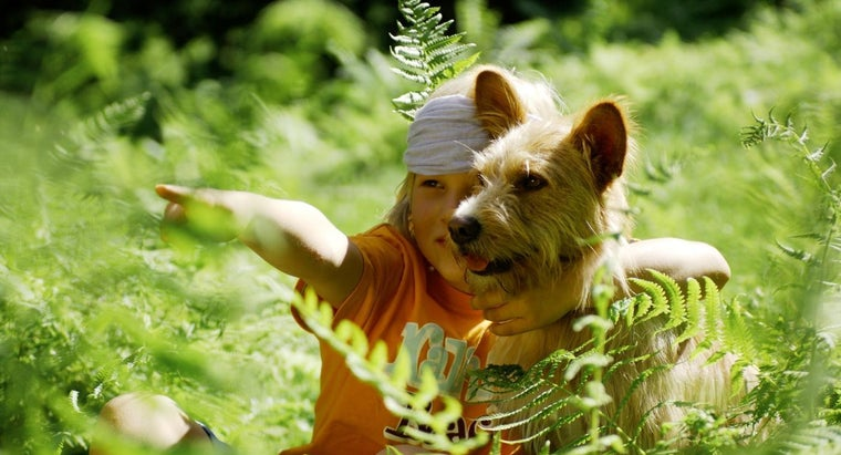 ferns-poisonous-dogs