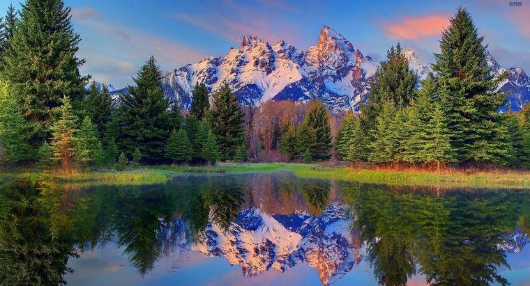 fertilizer-pine-trees