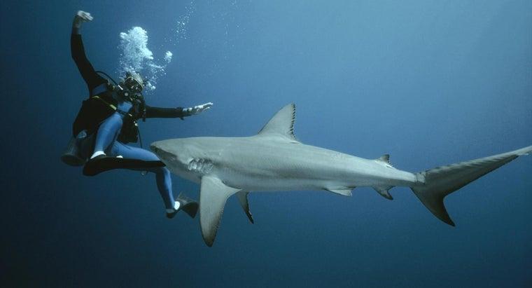 fight-shark