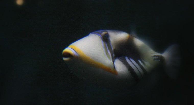 fish-called-humuhumunukunukuapua