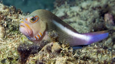 Do Fish Have Eyelids?