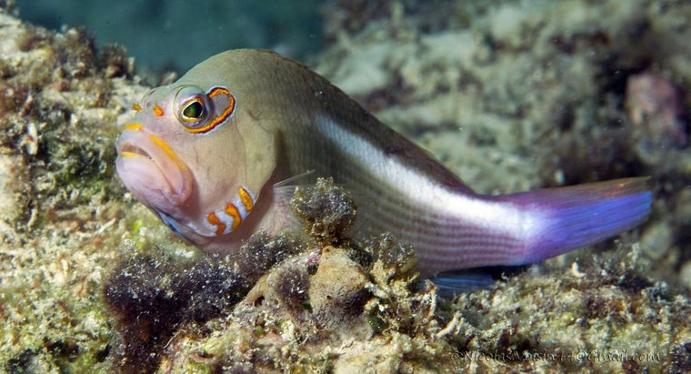 fish-eyelids