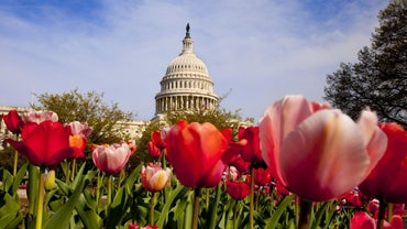 What Are the Five Non-Legislative Powers of Congress?