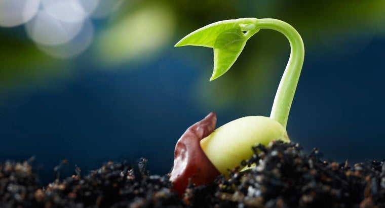 five-stages-seed-germination