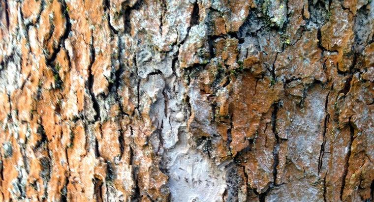 fix-tree-bark-missing