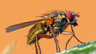 Why Do Flies Bite?