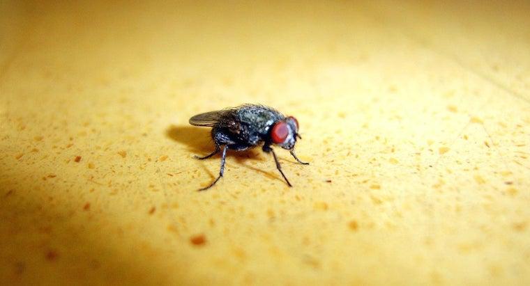 flies-eat