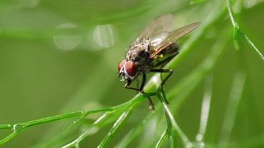 Where Do Flies Go When It Rains?
