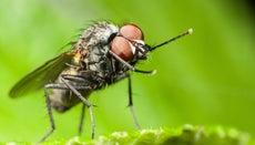 Where Do Flies Sleep?