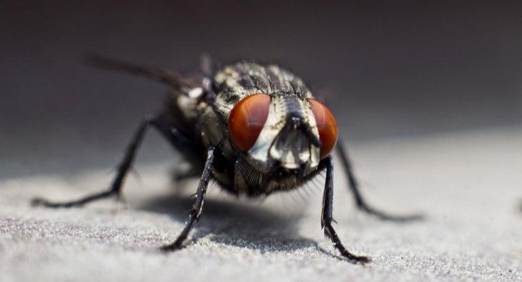 flies-symbolize