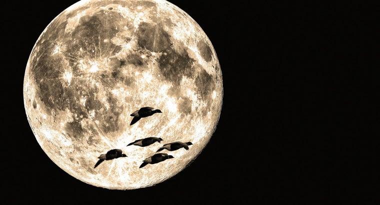 flock-geese-flight-called