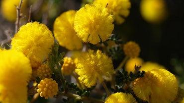 What Flowers Bloom in December?