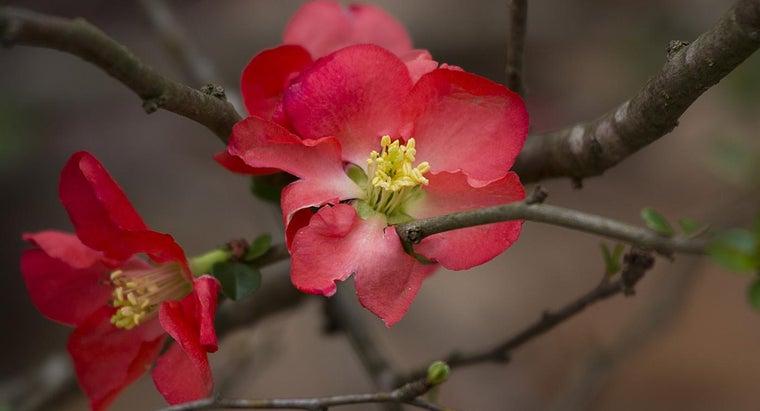 flowers-bloom-february