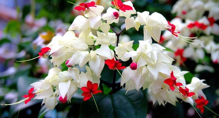 flowers-bloom-june