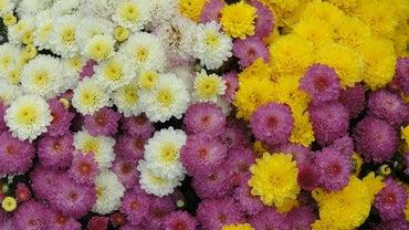 What Flowers Bloom in September?